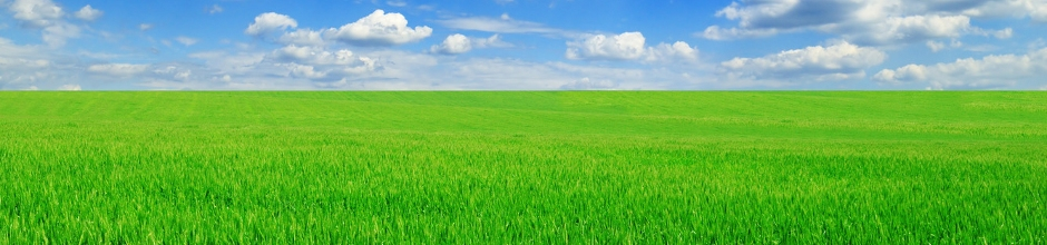 izglitojosi-raksti-augu-sekas-nozime-lauksaimniecibas-kulturu-razibas-celsana