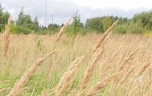 """Top1: LPKS """"Agrario'' valdes priekšsēdētājs Andrejs Savdons: ''Pašlaik ir pieņemtas pirmās 50.000 tonnas graudu. Ražas ir labas, bet kopumā sezona ir mierīga. Šis ir viens no retajiem gadiem, kad arī ostās pieņemšana notiek raiti.  Cenas rapsim ir labas, kviešiem - vidēji labas. Augstās graudu ražas Eiropā, Krievijā, Ukrainā, kā arī pārejošie krājumi rada pamatīgu spiedienu uz cenām, bet jāņem vērā arī to, ka austrumu kaimiņiem vēl 40% labības stāv uz lauka un iekavējusies ir ziemāju sēja. Pamatīgs atsitiens ir zirņu un pupu cenām, kas kārtējo reizi pierāda to, ka, jo vairāk sadalīsim riskus starp kultūrām, jo labāk jutīsimies.  Ap 10.septembri atsākām lucernas novākšanu. Sakarā ar ražošanas jaudu kāpināšanu plānojam nākamgad nedaudz palielināt lucernas platības.  Ievērojami vairāk jāpiestrādā ir pie stiebrzāļu audzēšanas un kvalitatīva siena ieguves. Šī joprojām ir brīva niša, kuras pieprasījums eksportā nav apmierināts. Visi, kas grib audzēt stiebrzāles, zvaniet, tālr.26396055."""