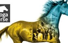 TOP3: Septembra sākumā Alfa Agro pārstāvis devās uz Vāciju, lai apmeklētu izstādi ''Spoga Horse'' un klientus.